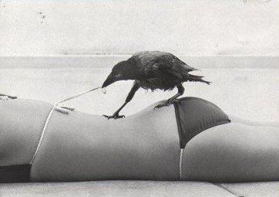 Meu estimado corvo Edgar, o maior secador do Brasil